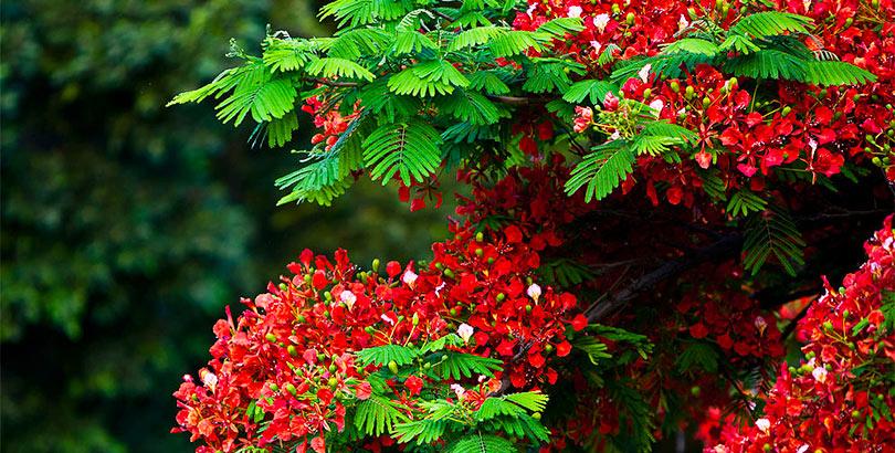 Los 22 árboles Coloridos Más Bonitos Del Mundo Cinco Noticias