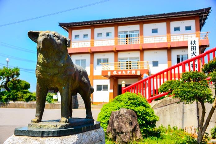 Akita Dog Museum (Japón)