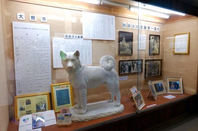 Vitrina con fotos y escultura de un Akita