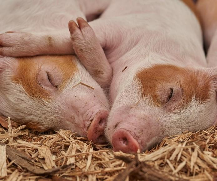 Algunos países planean recortar el consumo de carne para beneficiar al planeta