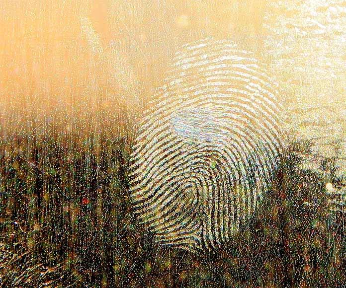 Artes forenses: los extraños oficios de los artistas forenses en criminología y criminalística