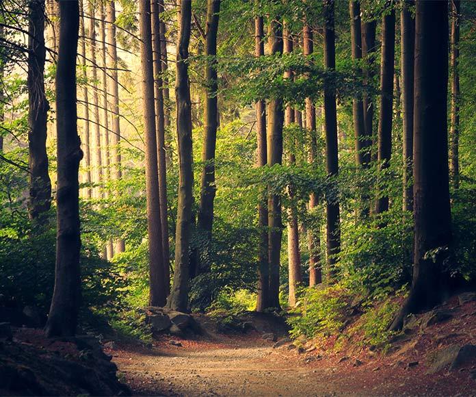 """Los """"baños de bosque"""" y cómo logran mejorar tu salud"""