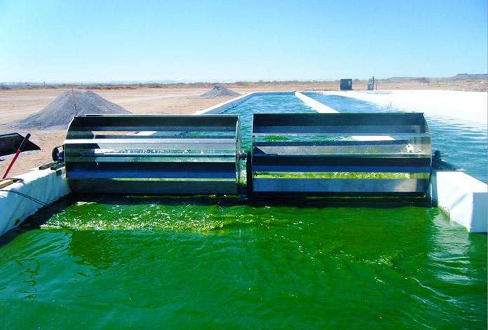 combustible diésel ecológico a base de algas