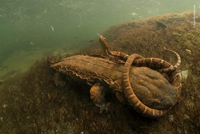 Reptiles descansando