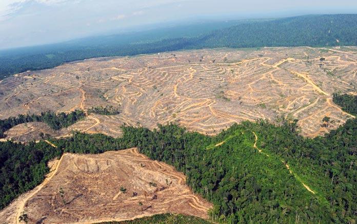 pandemia del planeta -Deforestación del Amazonas