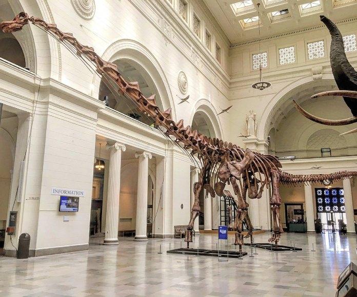 Descubren el verdadero origen de los dinosaurios