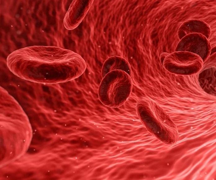 Descubren que los pulmones producen sangre