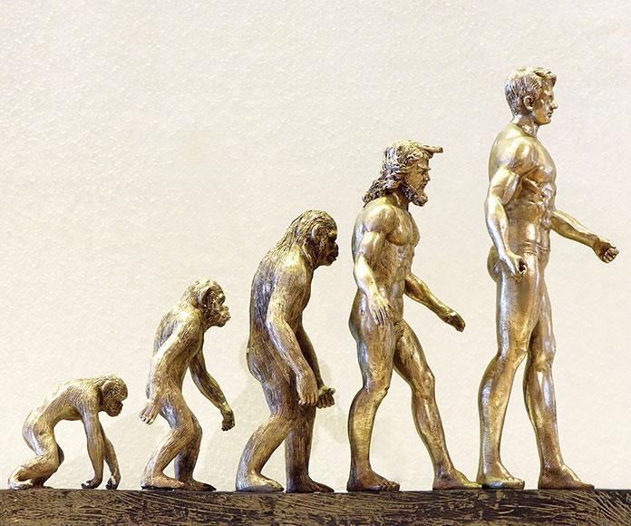 Especies humanas: origen, características y evolución de las especies de humanos conocidas