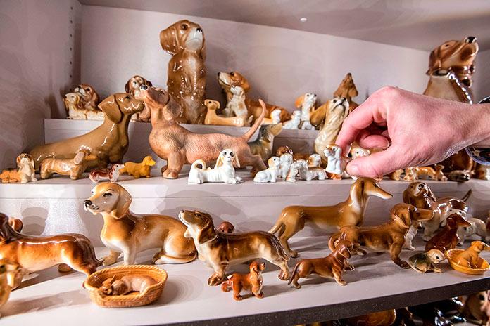Perros salchicha en todas las formas, colores y tamaños