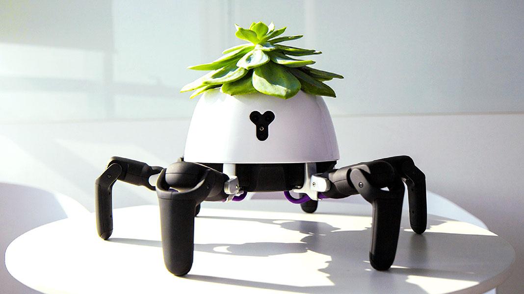 Hexa, el robot araña que cuida tus plantas