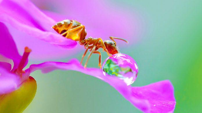 Hormiga reina: descubriendo a uno de los insectos más inteligentes del planeta