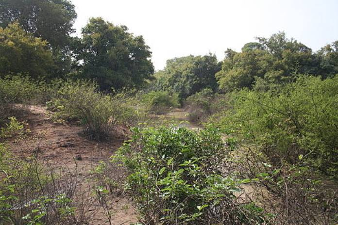 Burkina Faso: Parque Nacional Kaboré Tambi