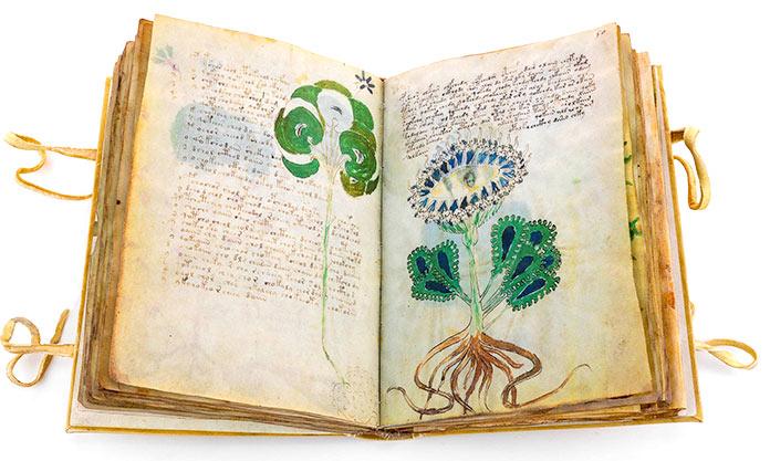 Manuscrito Voynich, sección sobre plantas