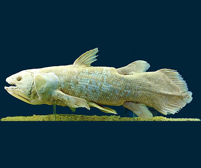 Monstruos reales encontrados en el agua