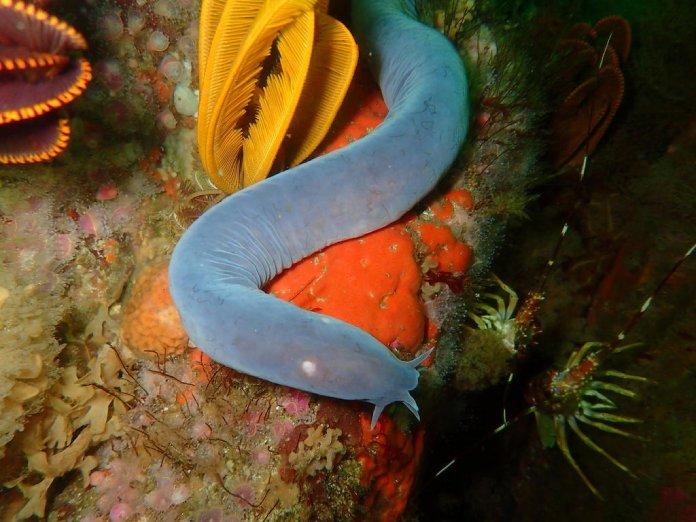 Monstruos marinos reales encontrados en el agua mixino