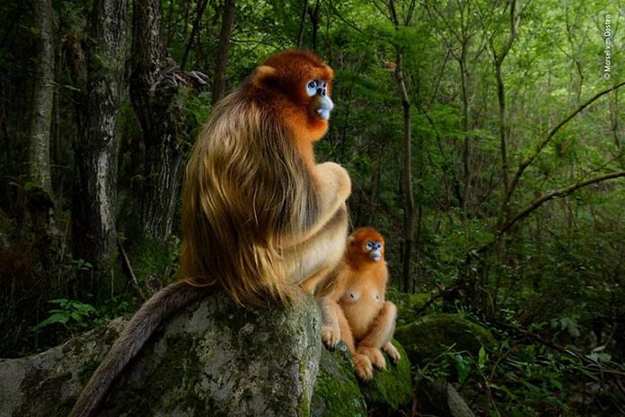Monos descansando en la selva