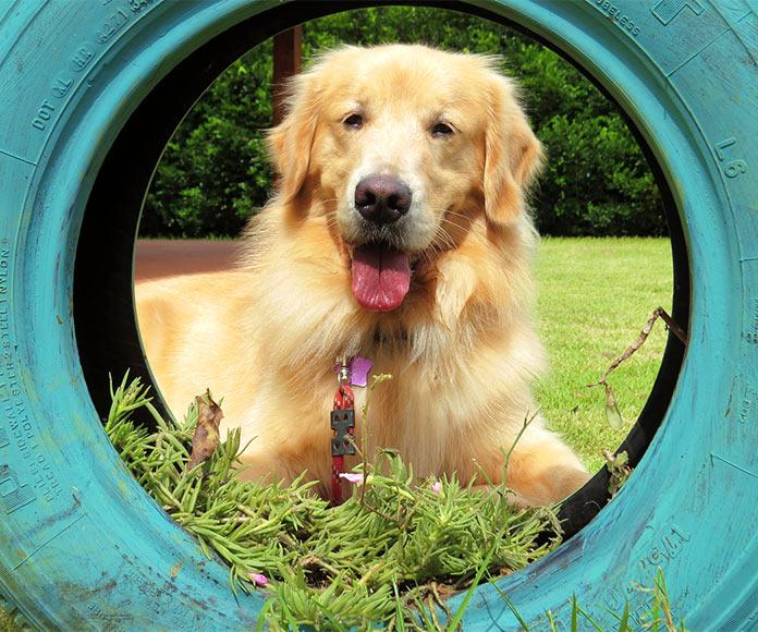Reciclaje funcional: Neumáticos viejos convertidos en camas para animales