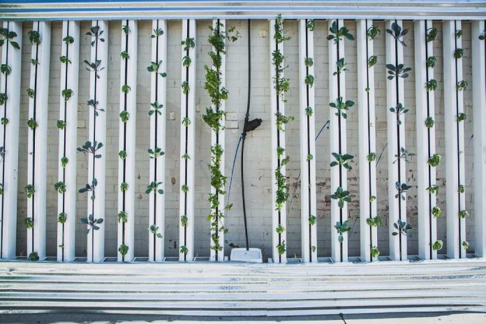 Tecnologias-Agropecuarias-Granja-Vertical
