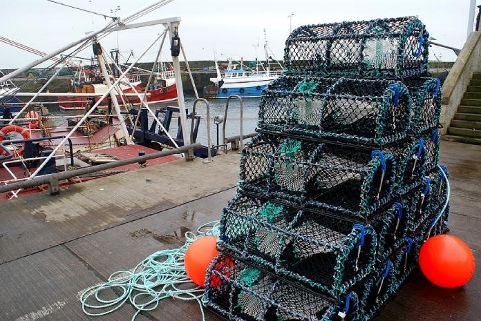 Tecnologias-AgropecuariasTrampas-De-Pescar-Modernas