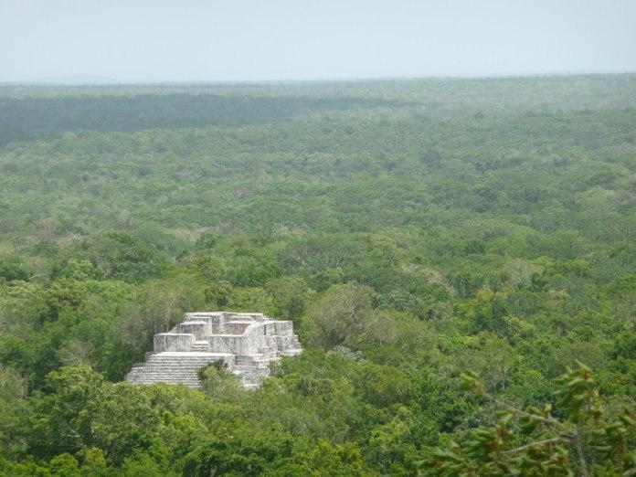 Templos mayas. Calakmul. Vista aérea.