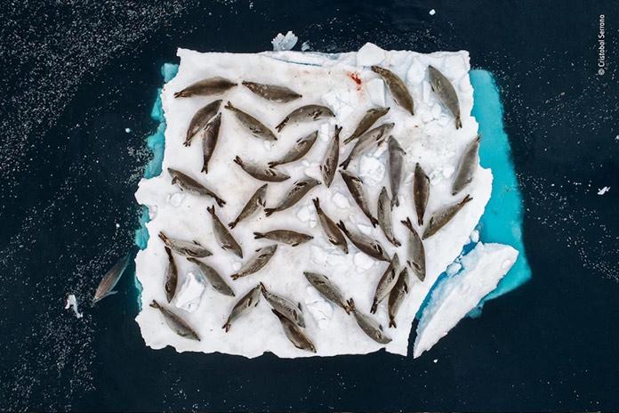 Peces descansando en hielo