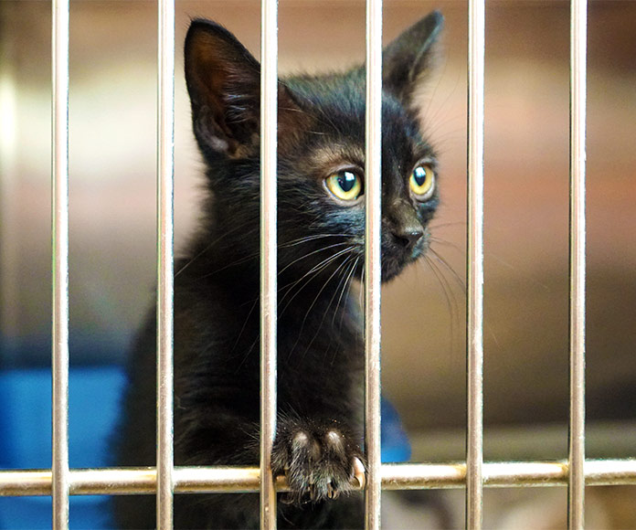 Ante el abandono animal, CERO excusas