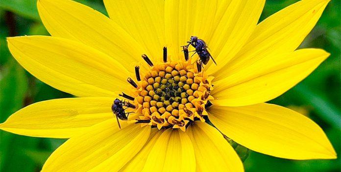 Los alérgicos al polen tendrán una primavera intensa.