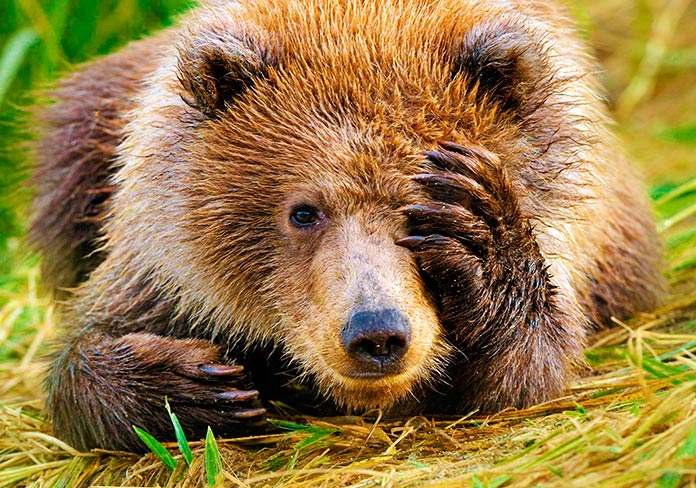 35 animales extintos y 30 especies a punto de extinguirse