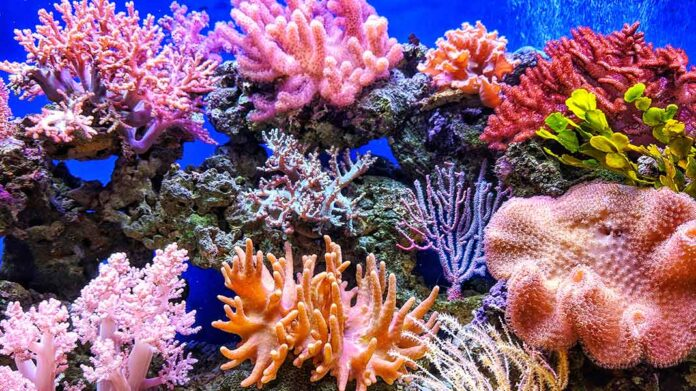 Los impresionantes arrecifes de coral que resisten al cambio climático