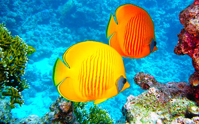 Peces cerca de arrecife