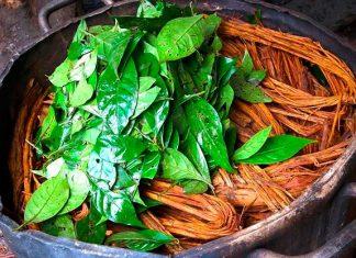 La ayahuasca produce los mismos efectos que las experiencias cercanas a la muerte
