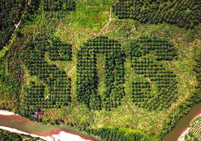Noruega prohíbe la compra de biocombustibles ligados a la deforestación