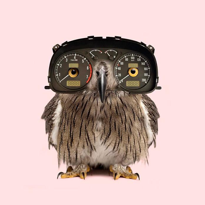 Dashboard owl (Les Creatonautes)