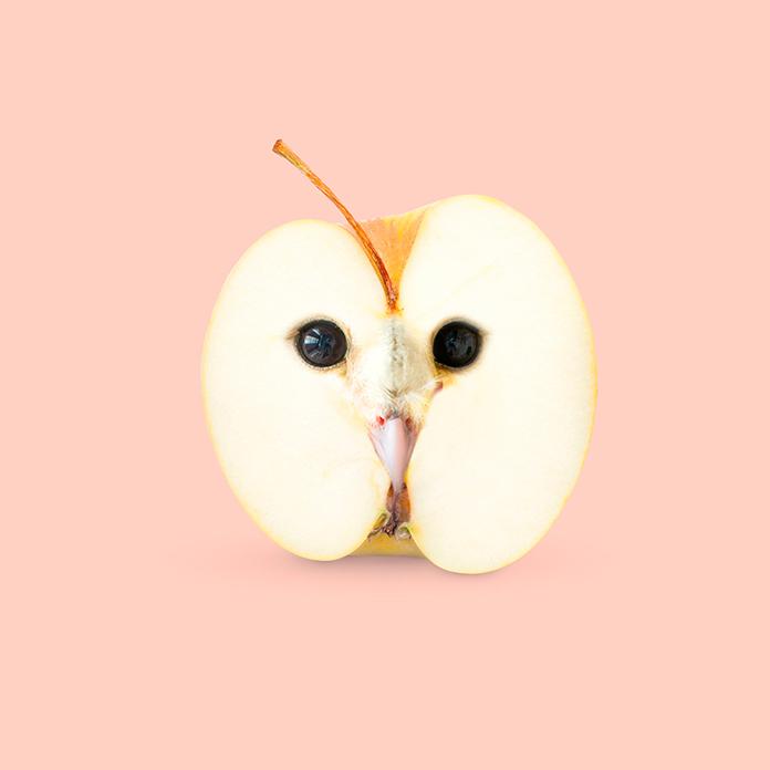 Appowl (Les Creatonautes)