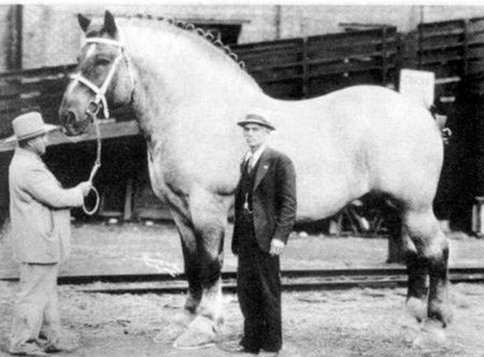 El caballo más grande del mundo