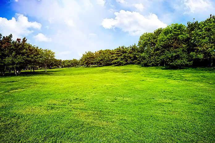 Prado verde rodeado de arbustos