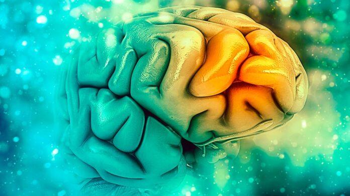 Nuevos descubrimientos sobre el cerebro humano que derriban muchas de tus creencias