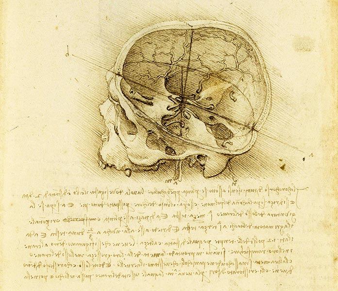 Dibujo de un cráneo que muestra los nervios y vasos intracraneales