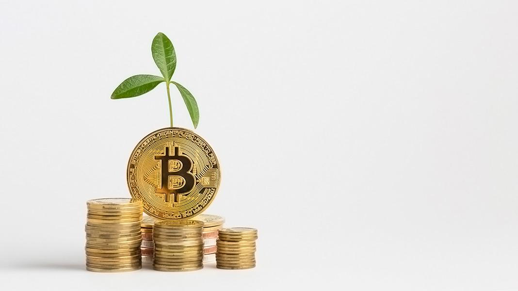 bitocoins delante de una planta en crecimiento