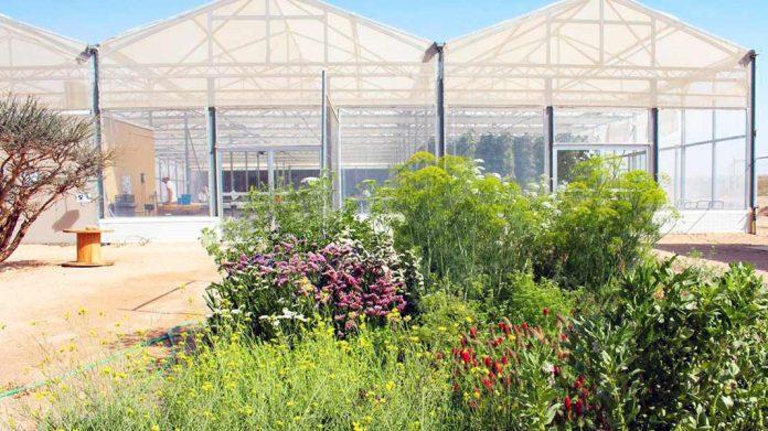 Cultivar en el desierto ya es posible con invernaderos que utilizan energía solar y agua del mar