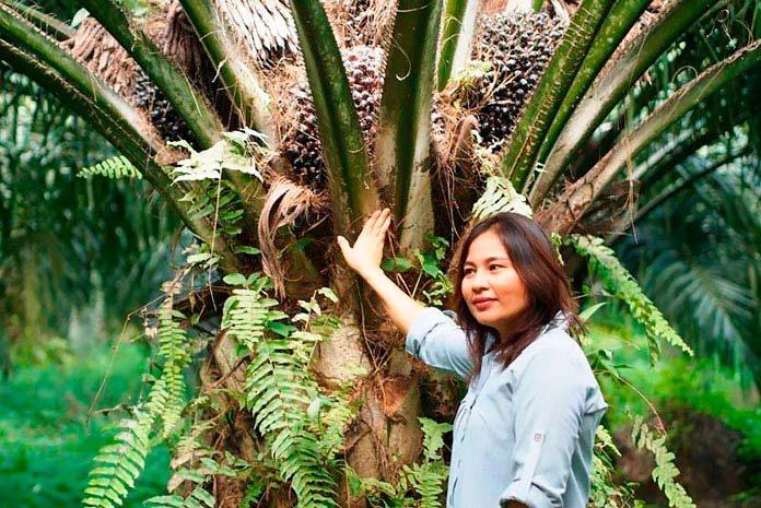 Los pequeños agricultores se unen para el cultivo ecológico de la palma.