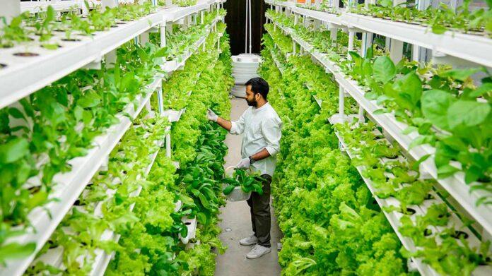 Grandes empresas tecnológicas invierten millones en la agricultura del futuro: los cultivos verticales