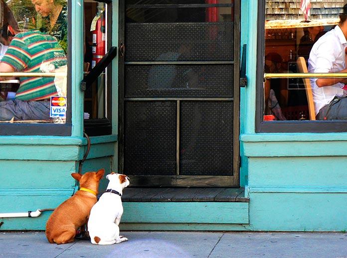 Limitar los derechos de las mascotas frena la economía y destapa muchas vergüenzas