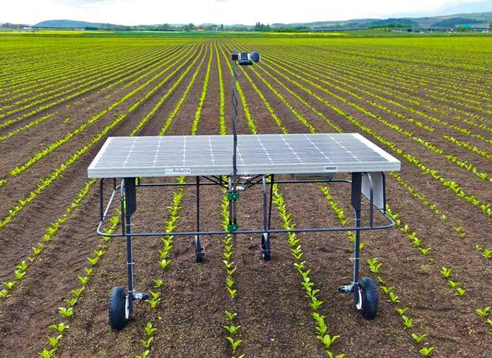 Un ecoRobotix trabajando en un cultivo
