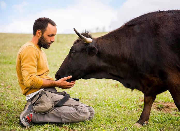 Fotografía de Eduardo Terrer con una de sus vacas