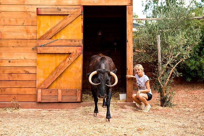 Elena Tova, fundadora de El Hogar Animal Sanctuary, junto a la vaca Margarita