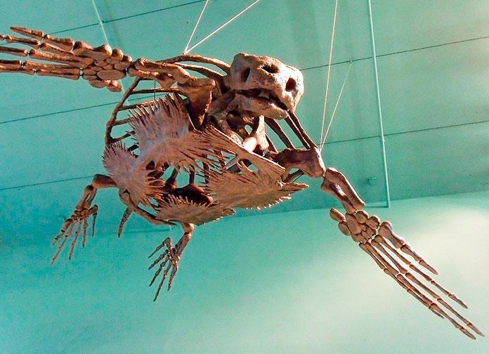 Esqueleto de la totuga Archelon