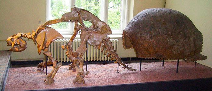 Esqueleto del Glyptodon