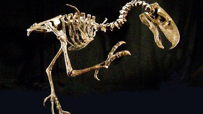 Esqueleto del ave titanis