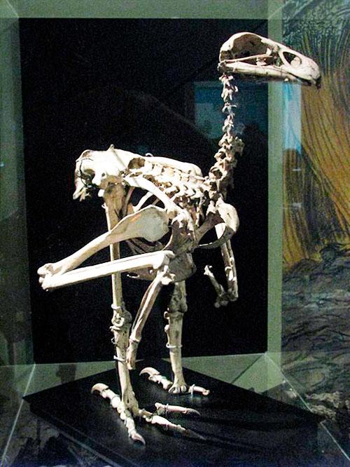 Esqueleto del águila de haast